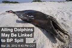 Ailing Dolphins May Be Linked to BP Spill