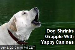 Dog Shrinks Grapple With Canines Who Can't Stop Yapping