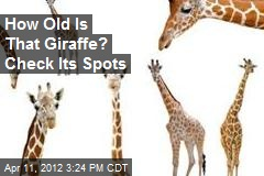 How Old is That Giraffe? Check Its Spots