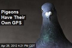Pigeons Have Their Own GPS