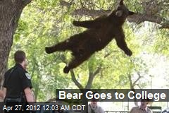 Bear Goes to College