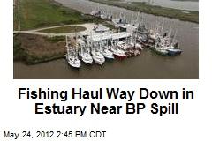 Fishing Haul Way Down in Estuary Near BP Spill