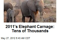 2011's Elephant Carnage: Tens of Thousands