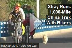Stray Makes 1,000-Mile China Trek With Bikers