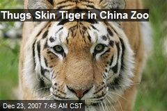 Thugs Skin Tiger in China Zoo