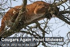 Cougars Again Prowl Midwest