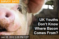 UK Youths Don't Know Where Bacon Comes From?