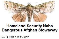 Homeland Security Nabs Dangerous Afghan Stowaway