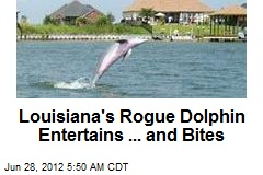 Rogue Dolphin Stalks New Orleans Suburb