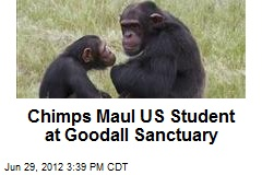 Chimps Maul US Student at Goodall Sanctuary