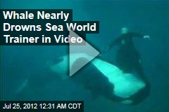 Whale Nearly Drowns Sea World Trainer in Video