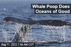 Whale Poop Does Oceans of Good