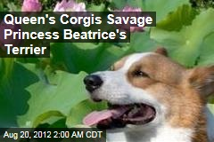 Queen's Corgis Savage Princess Beatrice's Terrier