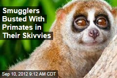 Smugglers Busted With Primates in Their Skivvies