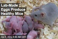 Lab-Made Eggs Produce Healthy Mice
