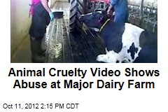 Animal Cruelty Video Shows Abuse at Major Dairy Farm