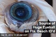Source of Huge Eyeball on Fla. Beach ID'd