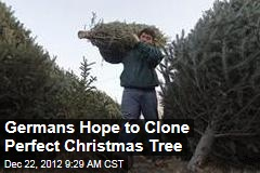 Germans Hope to Clone Perfect Christmas Tree