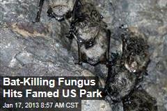 Bat-Killing Fungus Hits Famed US Park