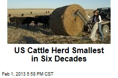 US Cattle Herd Smallest in Six Decades