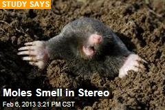 Moles Smell in Stereo