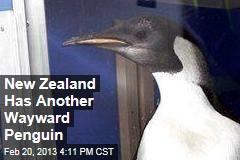New Zealand Has Another Wayward Penguin