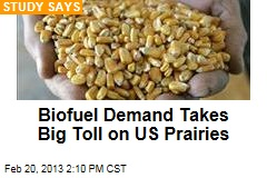 Biofuel Demand Takes Big Toll on US Prairies