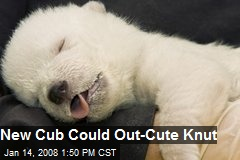 New Cub Could Out-Cute Knut