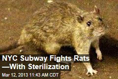 NYC Subway Fights Rats —With Sterilization