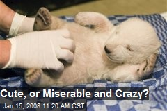 Cute, or Miserable and Crazy?