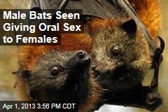 Male Bats Seen Giving Oral Sex to Females