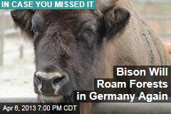 Bison to Roam Forests in Germany Again