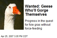 Wanted: Geese Who'll Gorge Themselves