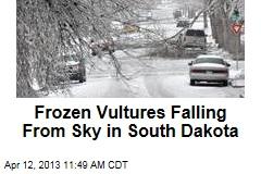 Frozen Vultures Falling From Sky in South Dakota