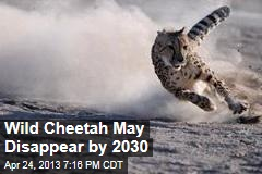 Wild Cheetah May Disappear by 2030