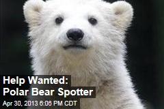 Help Wanted: Polar Bear Spotter