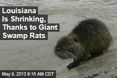 Louisiana Is Shrinking, Thanks to Giant Swamp Rats