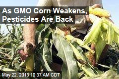 As GMO Corn Weakens, Pesticides Are Back