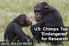 US: Chimps Too 'Endangered' for Research