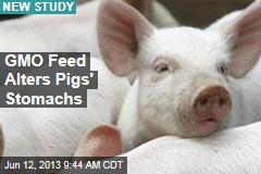 GMO Feed Alters Pigs' Stomachs