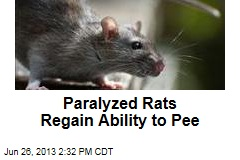 Paralyzed Rats Regain Ability to Pee
