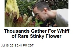 Thousands Gather For Whiff of Rare Stinky Flower