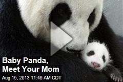 Baby Panda, Meet Your Mom