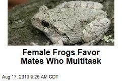 Female Frogs Favor Mates Who Multitask