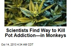 New Drug Helps Monkeys Kick Pot Addiction