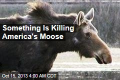 America's Moose Are Dying Off