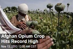 Afghan Opium Crop Hits Record High