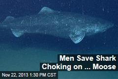 Men Save Shark Choking on ... Moose