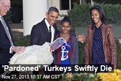 'Pardoned' Turkeys Swiftly Die
