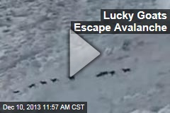 Goats Manage to Escape Avalanche
